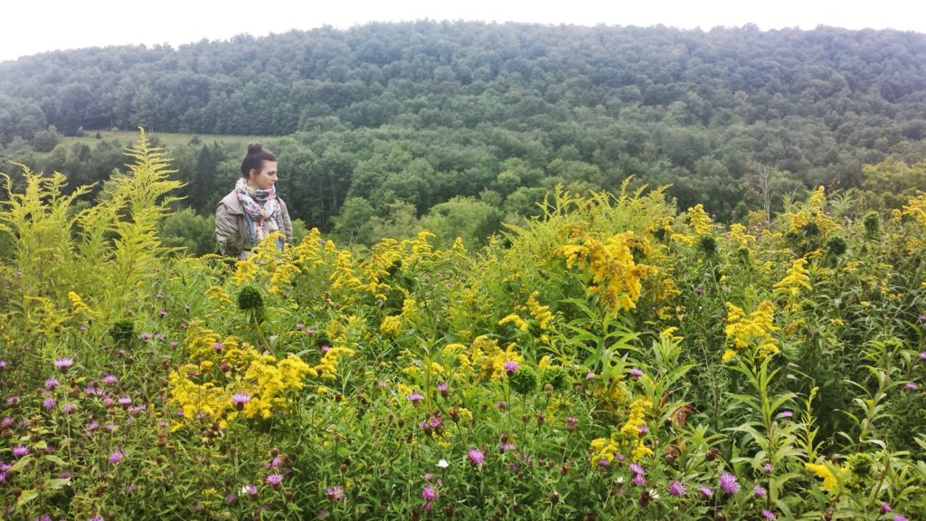 Picking wildflowers in Upstate New York