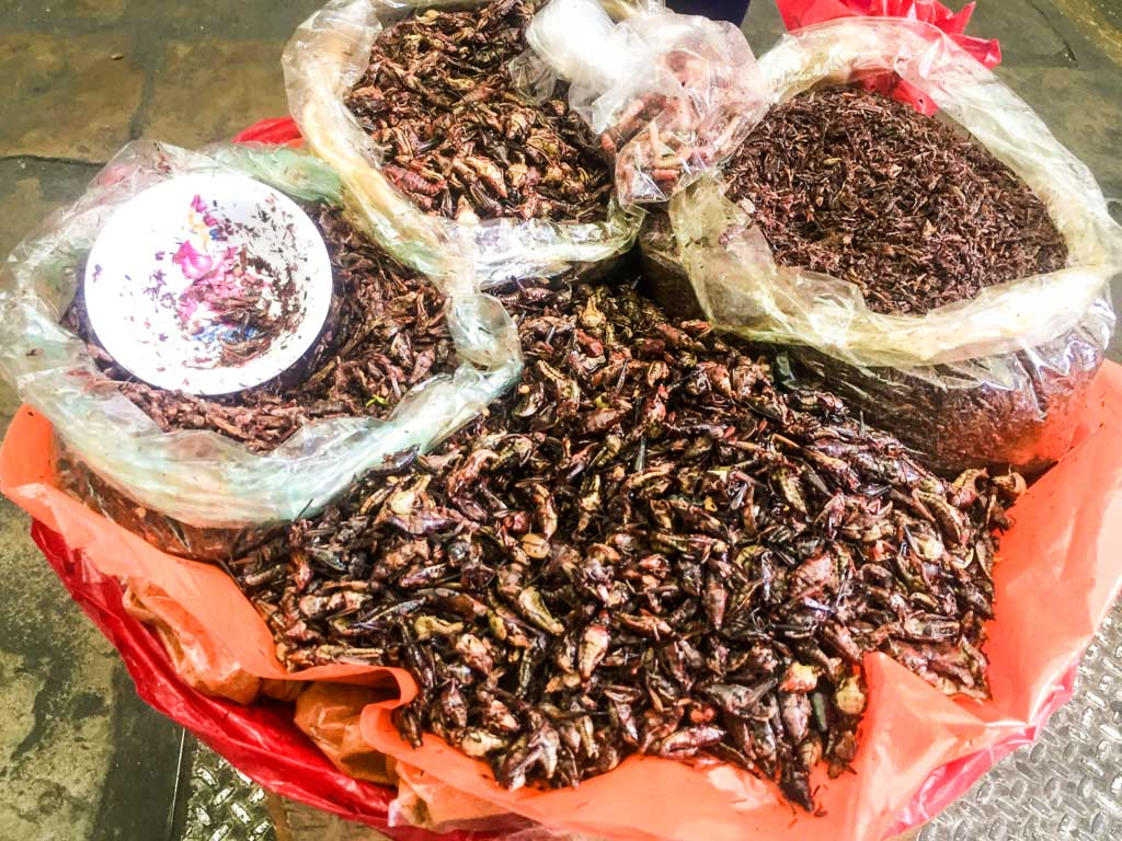 oaxaca must eats chapulines in the market
