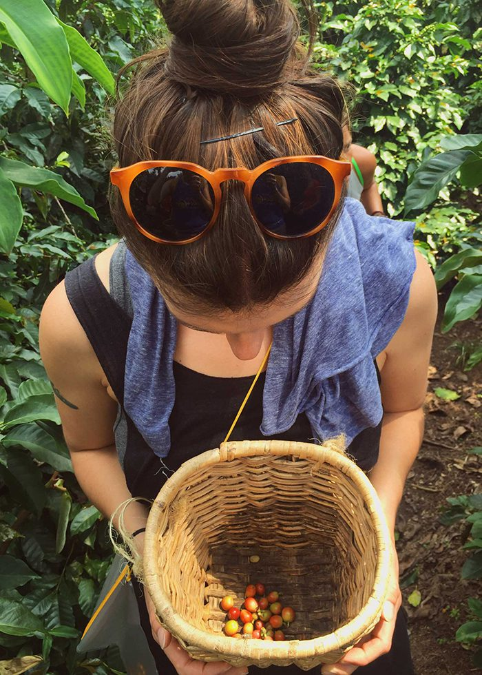 Picking Coffee fruit in Salento, Colombia