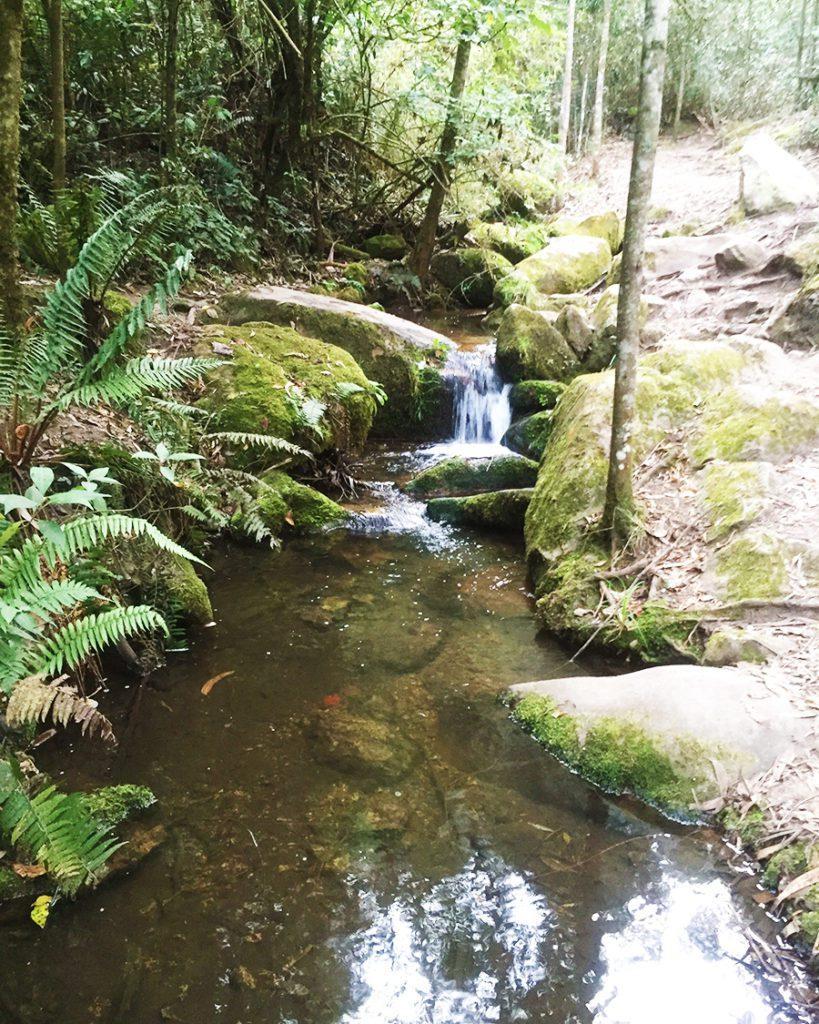 creek in Quebrada la Vieja  Bogota