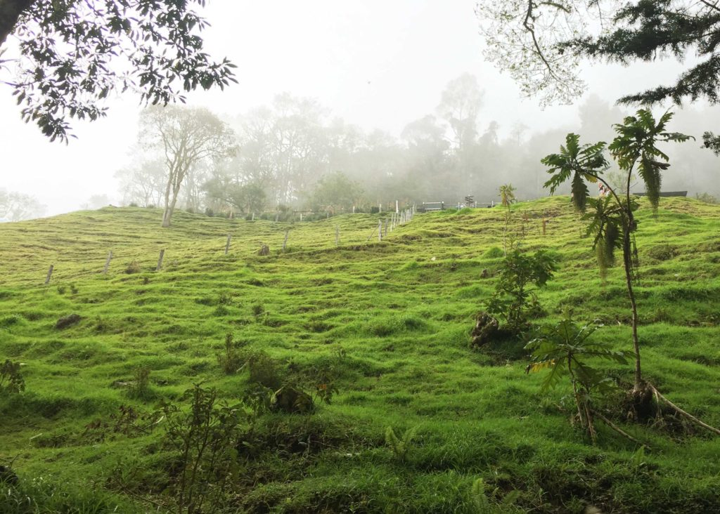 Finca la Montaña from below, Colombia