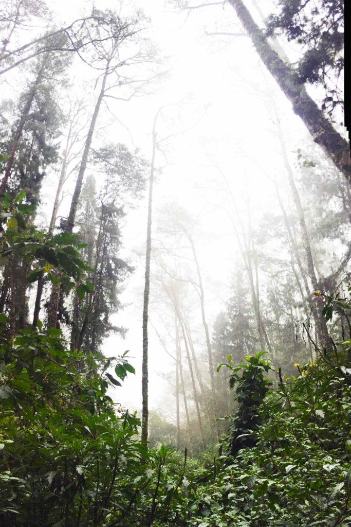 Jungle forest Valle de Cocora, Colombia