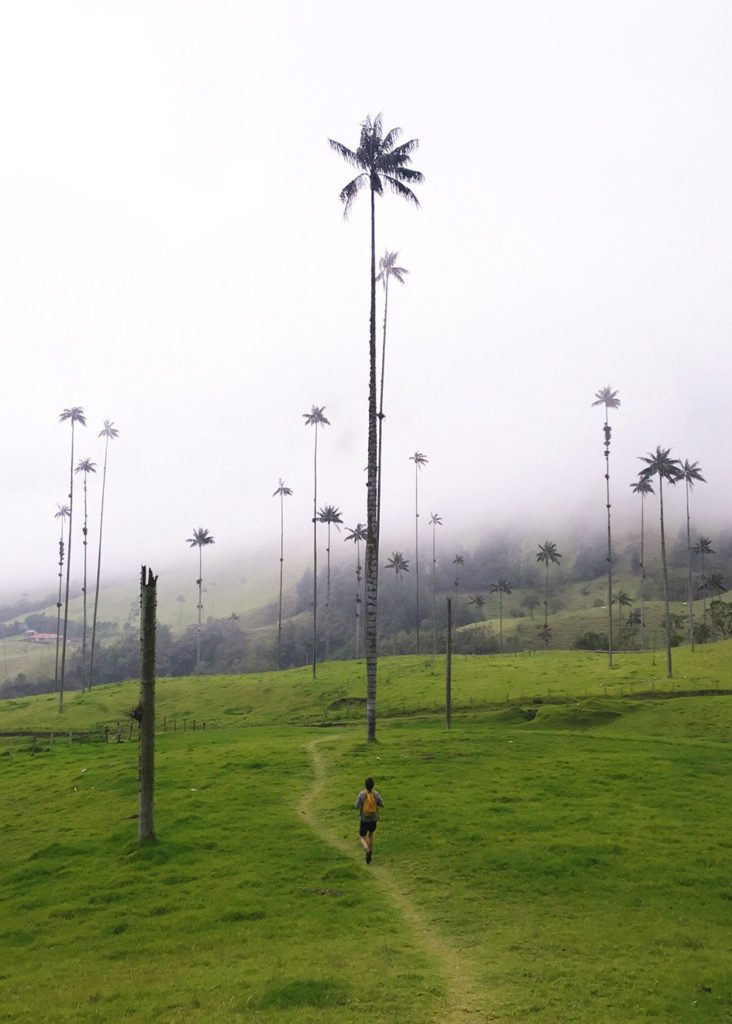 Justin in Valle de Cocora, Salento