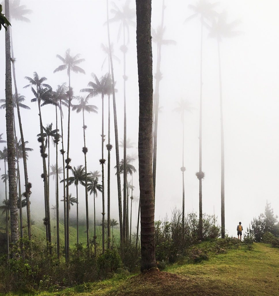 Justin in the palm trees, Valle de Cocora, Colombia