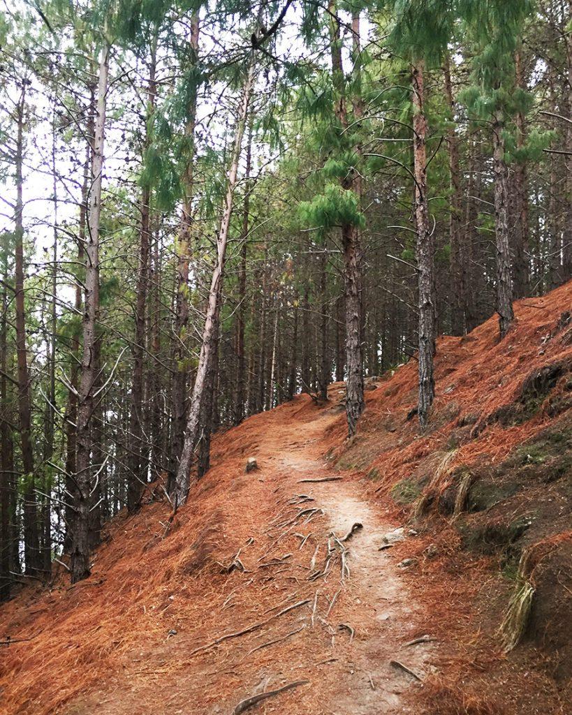 hiking path quebrada la vieja bogota