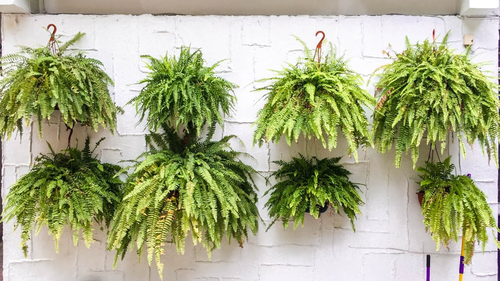 plants at Casa de las bugambilias oaxaca