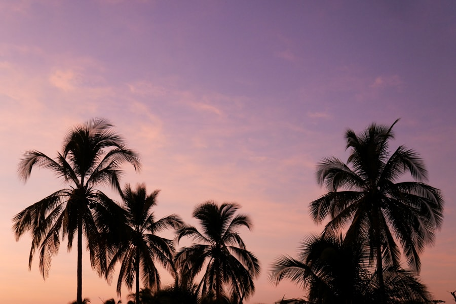 palm trees playa destiladeros