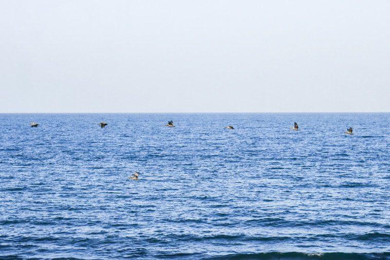 playa arenal panama birds