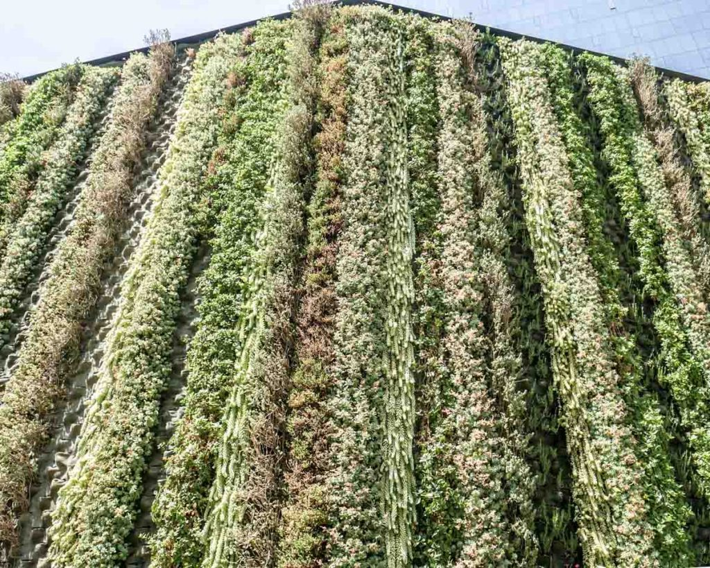 living wall mexico city