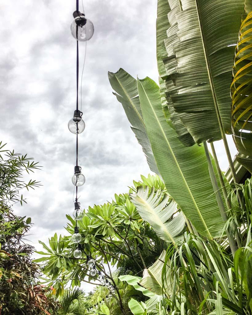 santa teresa hotel jungle