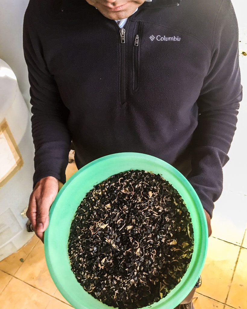 agave plant seeds lalocura oaxaca