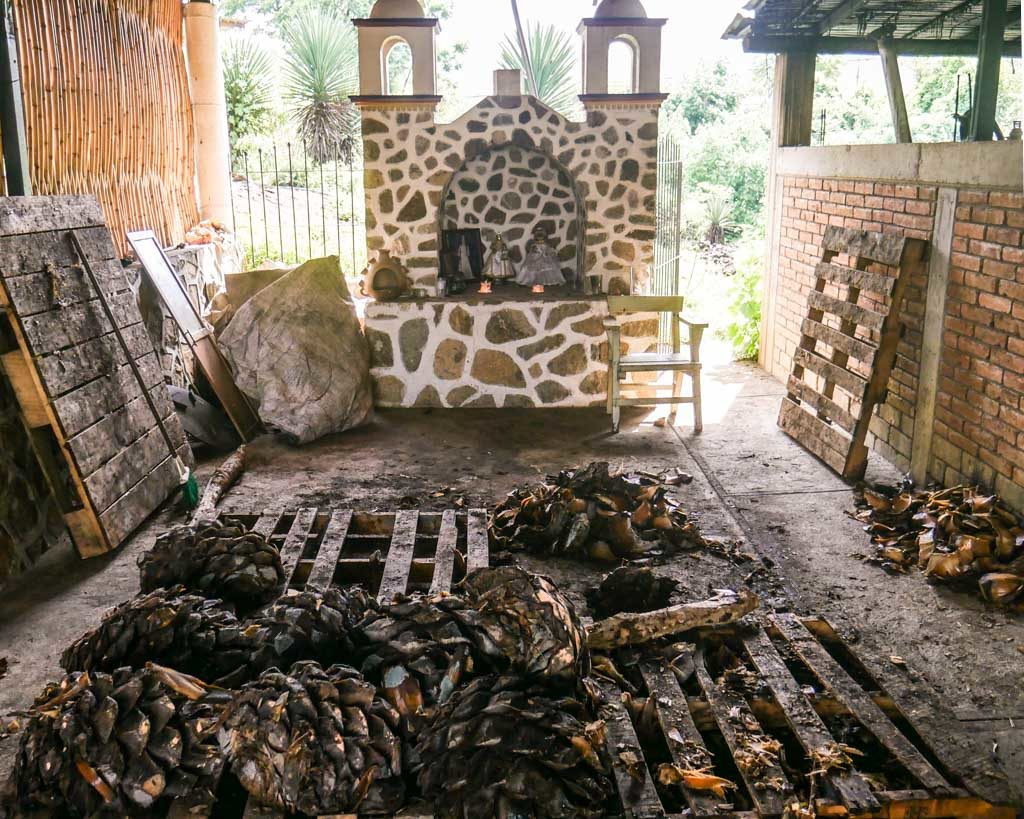 roasted agaves oaxaca mezcal tour