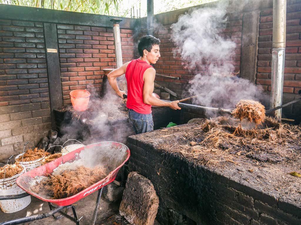 making mezcal oaxaca