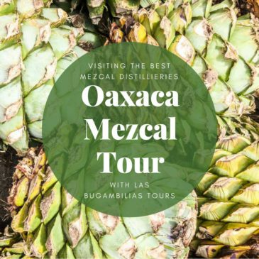 Oaxaca Mezcal Tour:  Guide to Visiting the Best Mezcal Distilleries  with Las Bugambilias Tours