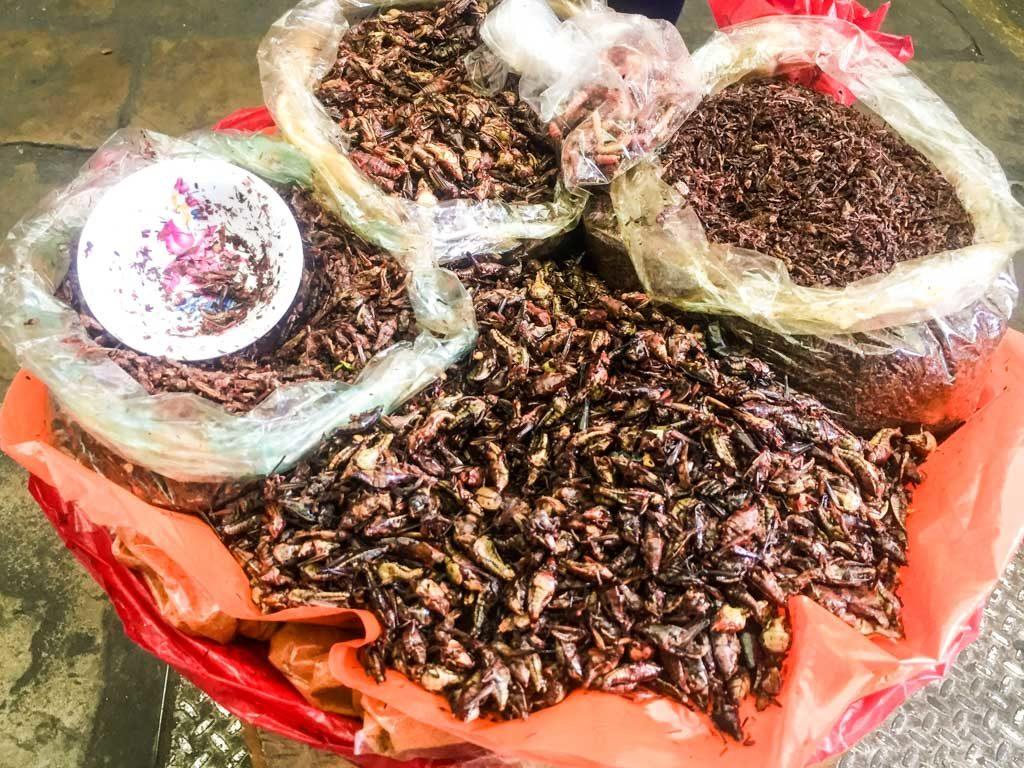 chapulines oaxaca markets