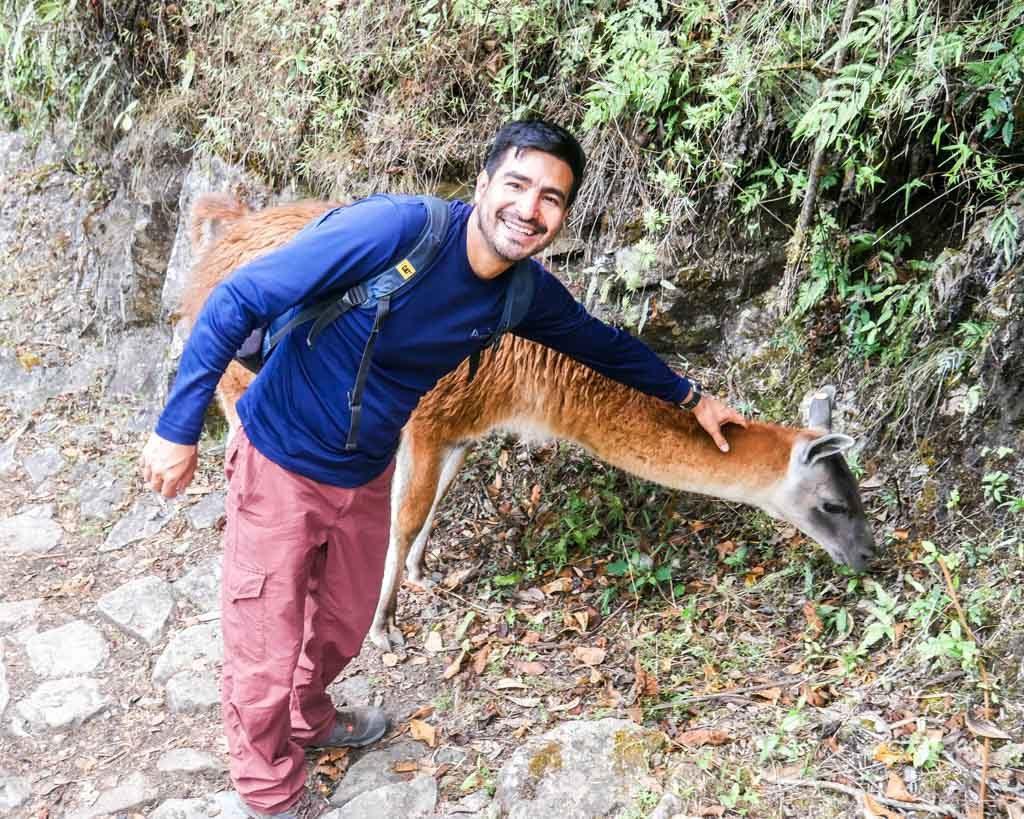tour guide llama inca trail
