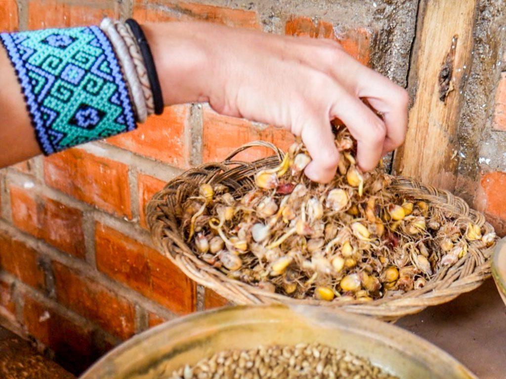 chicha ingredient corn