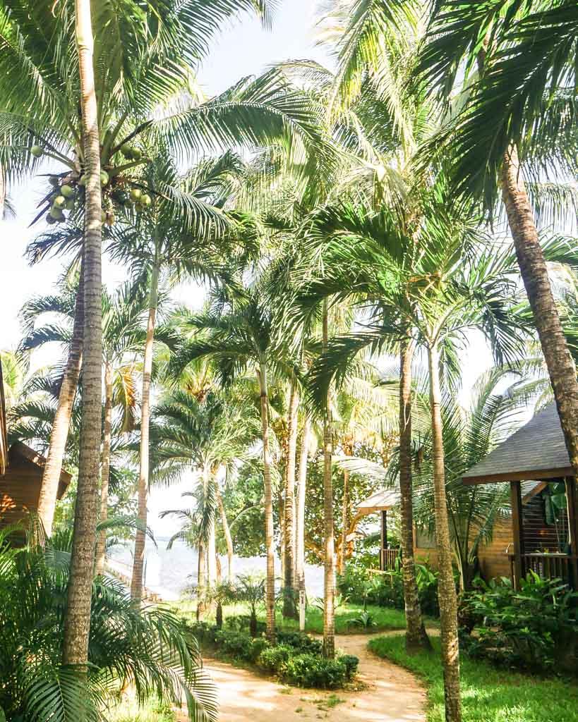 hotel roatan palm trees gardens