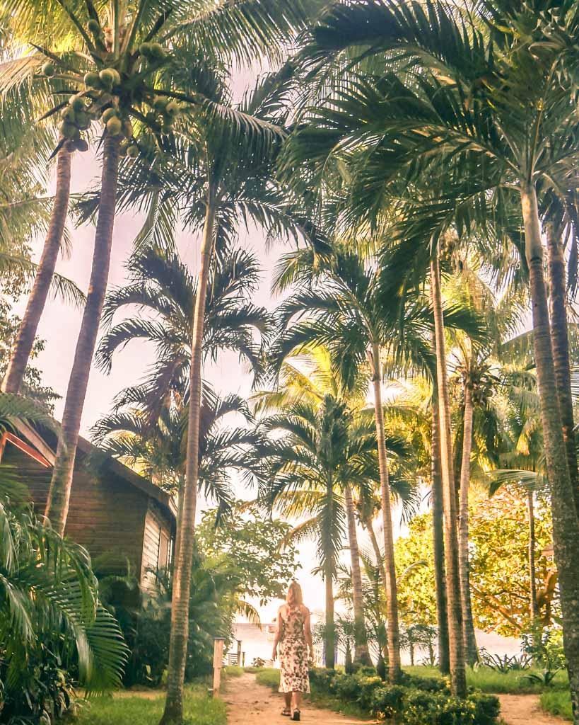 palm trees roatan honduras