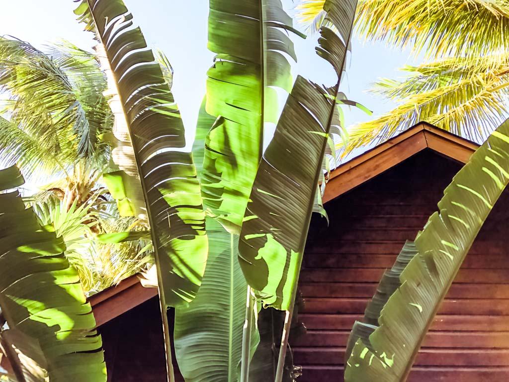 roatan hotel bungalow