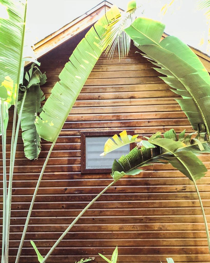 roatan hotel jungle grounds