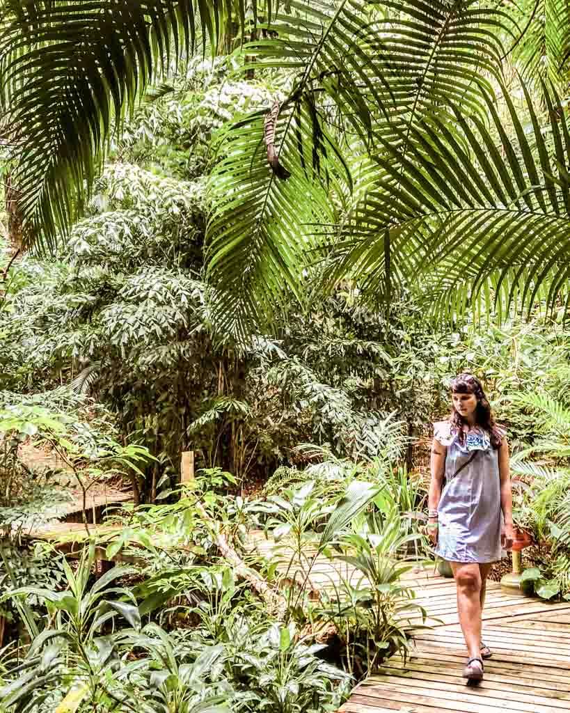 carambola gardens botanical garden roatan