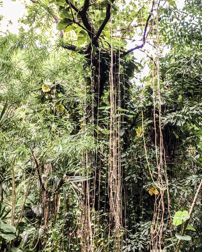 carambola gardens nature roatan travel honduras