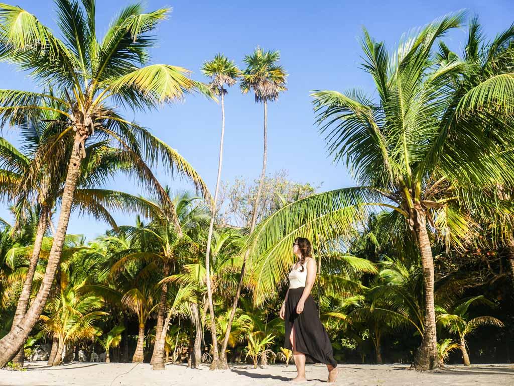 west bay beach palm trees roatan