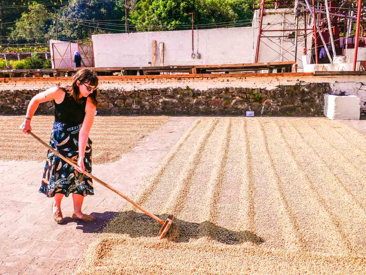 coffee tour el salvador el carmen estate ataco
