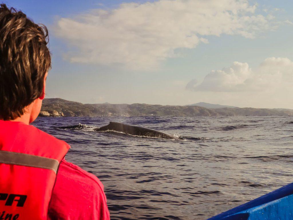boat tour whale watching san agustinillo mazunte oaxaca