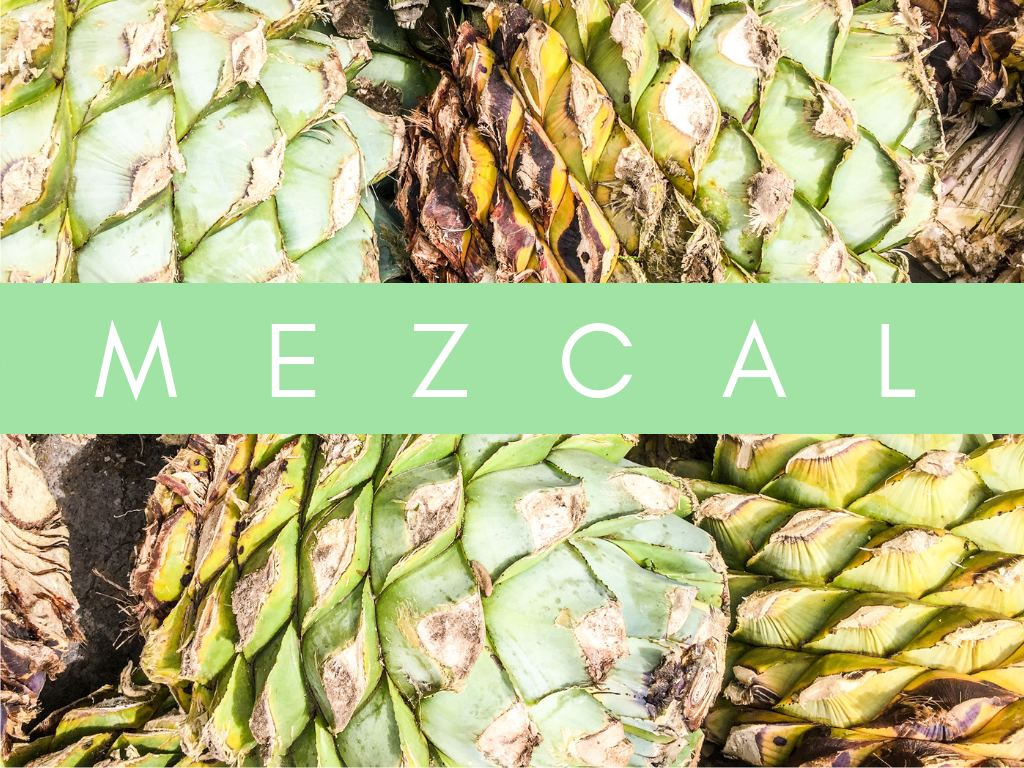 home page graphics mezcal