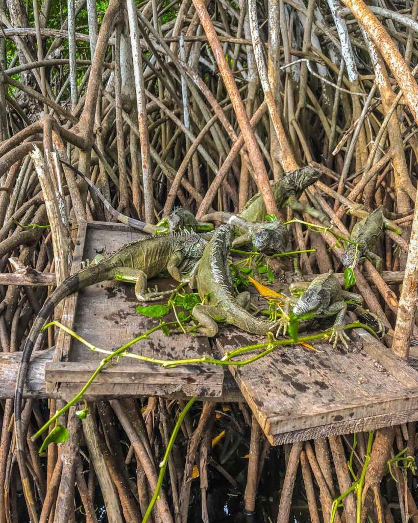 la ventanilla iguanas wildlife tour