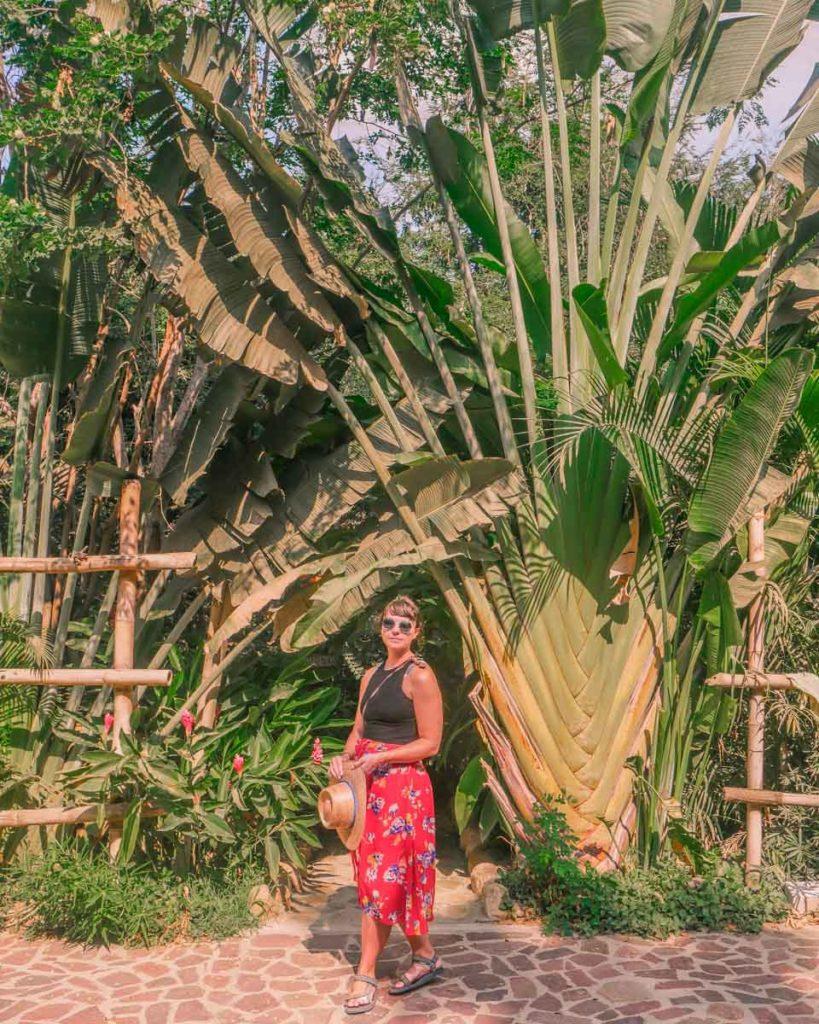 mazunte oaxaca travel guide san agustinillo