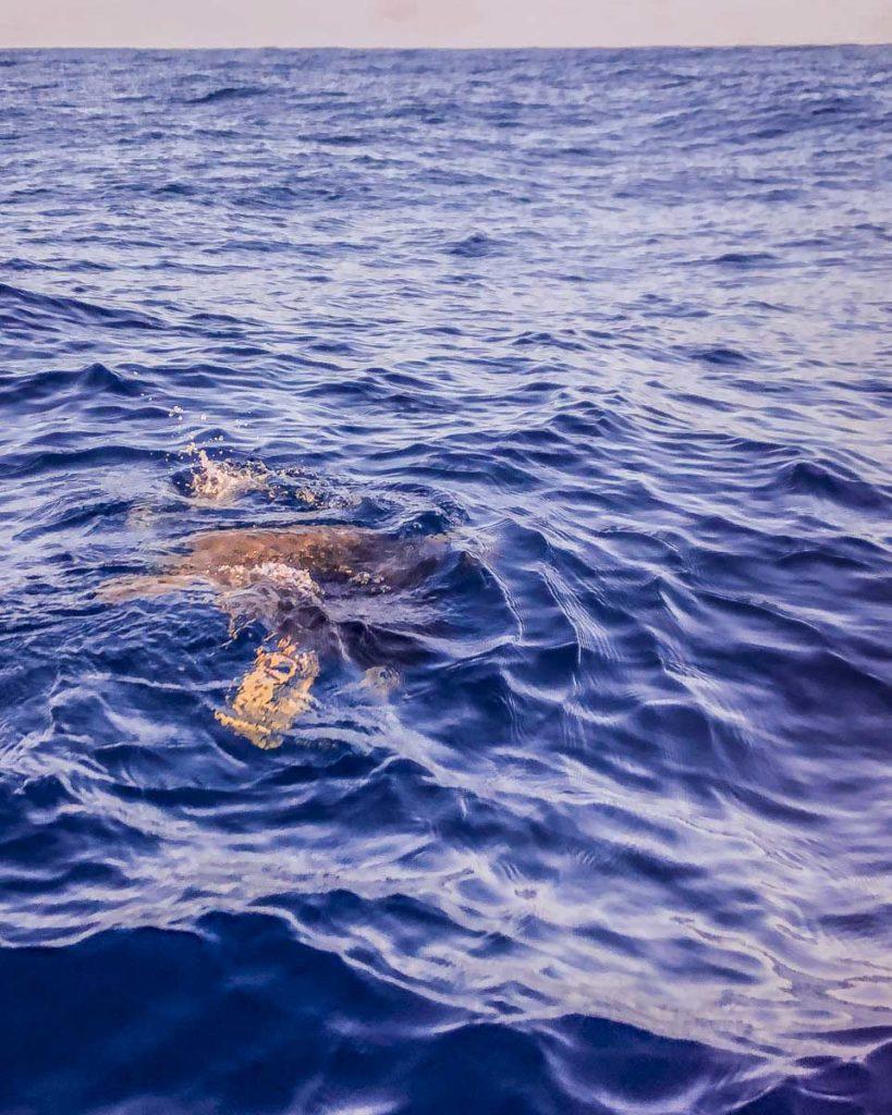 san agustinillo mazunte oaxaca boat turtle tour