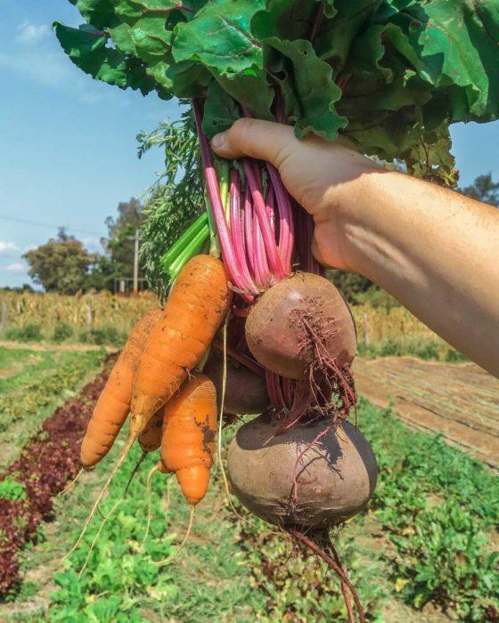 biohuacal organic farm in oaxaca