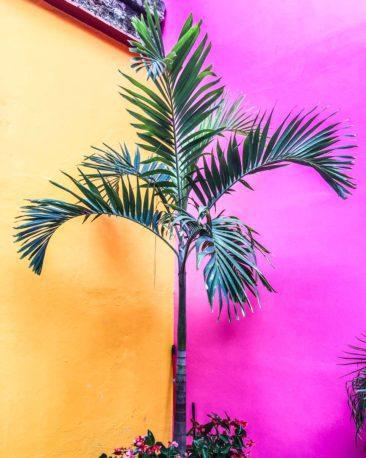 oaxaca retreats colorful walls