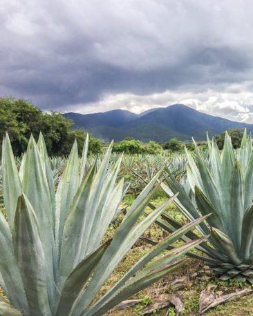 oaxaca retreats food tour mezcal farmLR