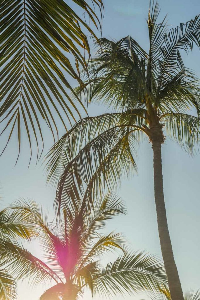 palm trees playa bacocho