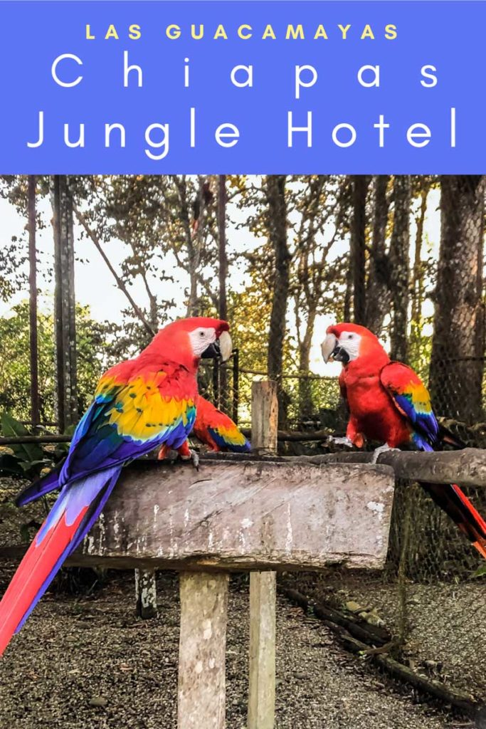 chiapas jungle hotel las guacamayas pinterest 6LR