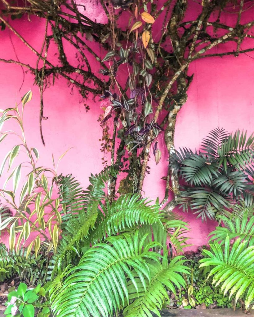 las guacamayas plants on pink