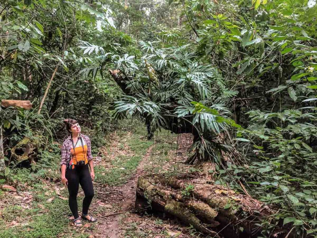 rainforest hike in chiapas jungle lacandona