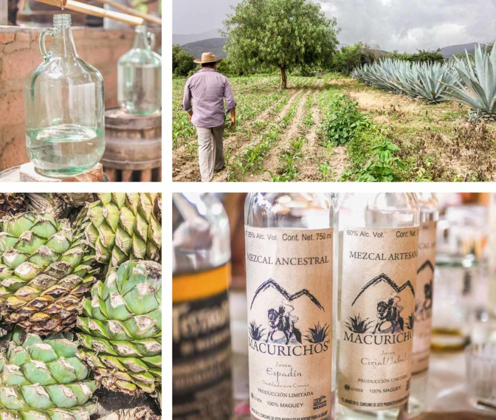 mezcal tour during oaxaca trip for 1 week