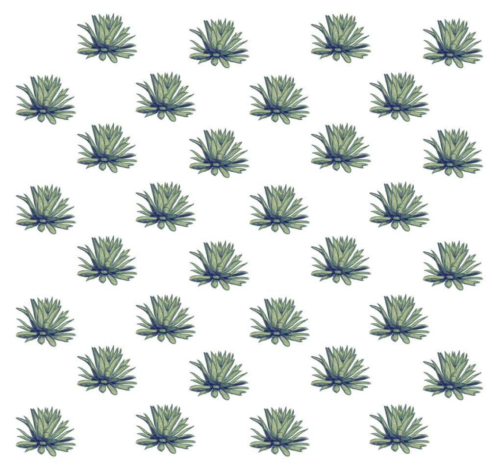 agaves patternLR
