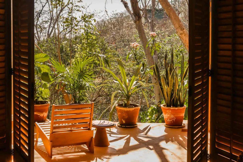 monte uzulu jungle view